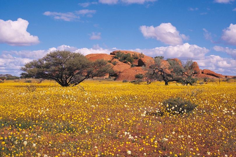 Western-Australia-Wildflowers-Australia